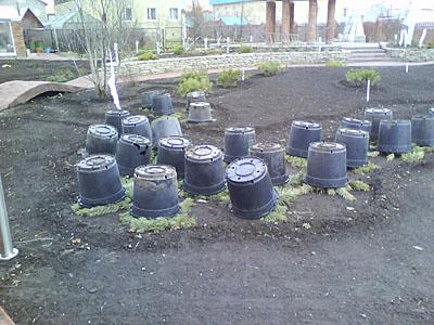 Розы подготовка к зиме в сибири